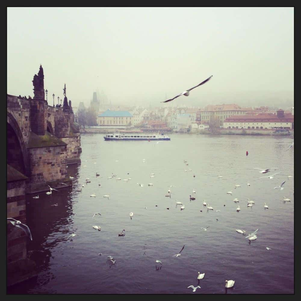 The Charles bridge in the fog with a bird flying past