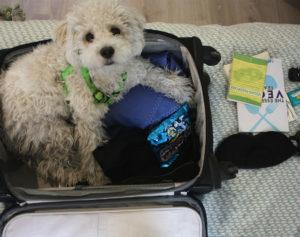 How to pack a vegan suitcase (dog not included)