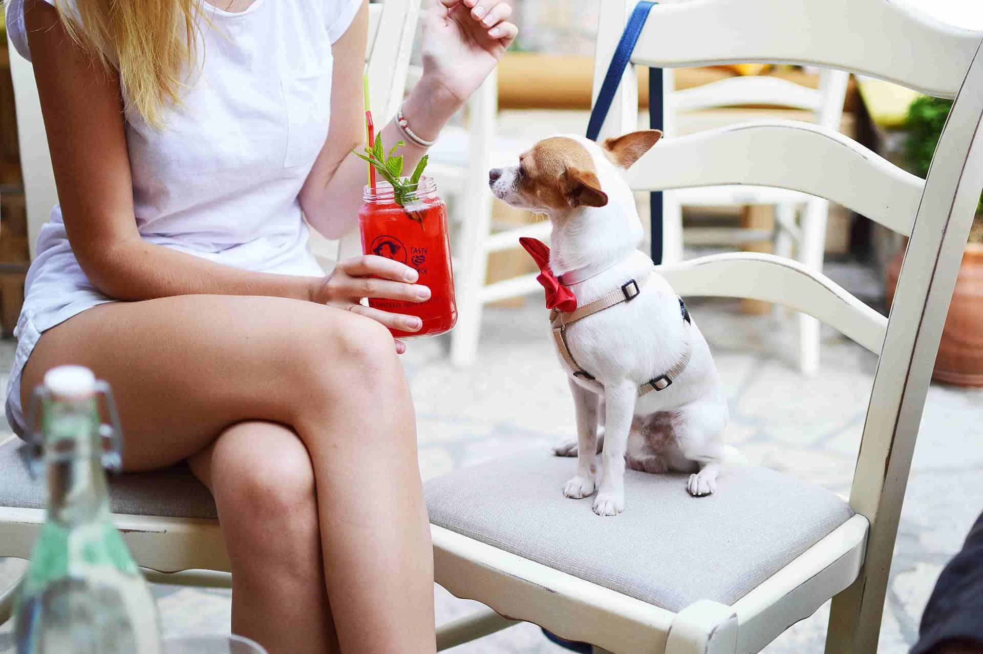 Dog Friendly Vegan Cafes, Restaurants & Pubs in London