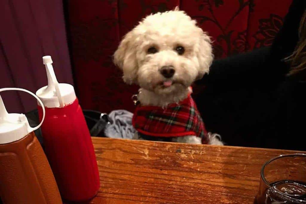 Dog Friendly Pubs In Wick