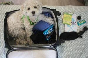 vegan luggage: the best vegan suitcases