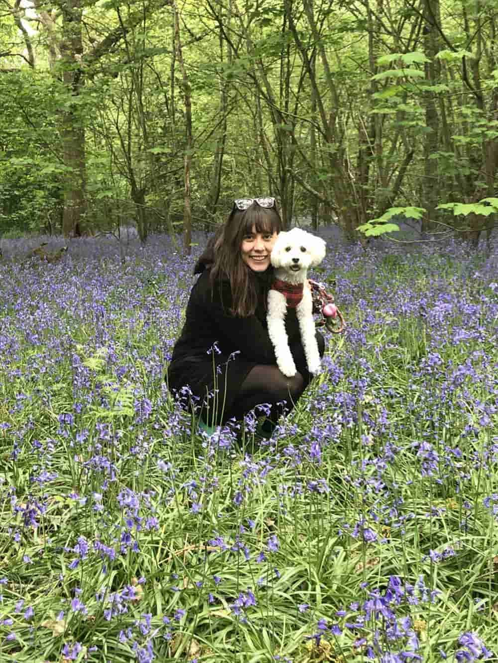 benito the vegan dogs in bluebells